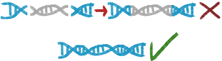 No risk for undesired permanent genetic modifications